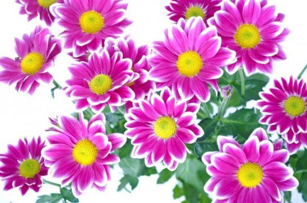Qu le ocurre a las plantas con el aire acondicionado Plantas limpiadoras de aire